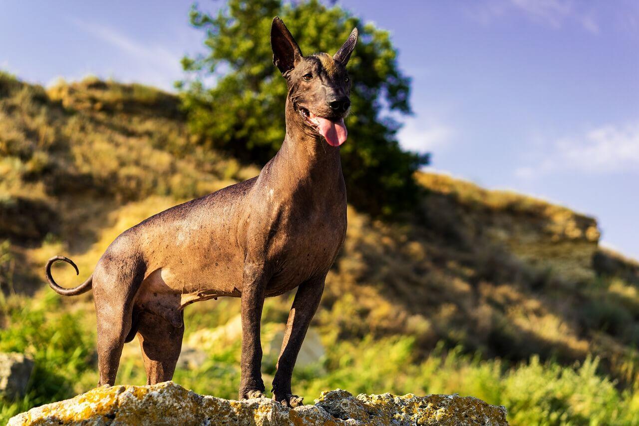 『リメンバー・ミー』の犬ダンテは死者の案内人?犬種や正体を考察!